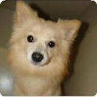 Adopt A Pet :: Charlie - Justin, TX