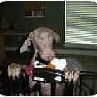 Adopt A Pet :: Emma Marie - Eustis, FL
