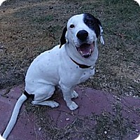 Adopt A Pet :: BOBBY - Okatie, SC
