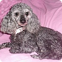 Adopt A Pet :: Sierra - Mooy, AL