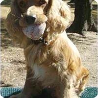 Adopt A Pet :: Astro - Sugarland, TX