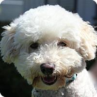 Adopt A Pet :: Presley - La Costa, CA