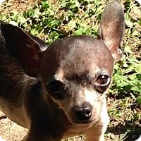Adopt A Pet :: Henry - Poulsob, WA