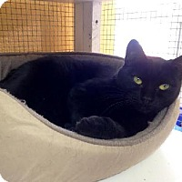 Adopt A Pet :: Adele - Hampton, VA