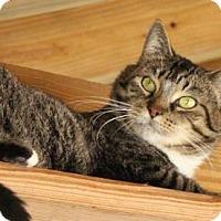 Adopt A Pet :: Augusta - Brunswick, GA