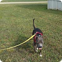 Adopt A Pet :: Roscoe - Inman, SC