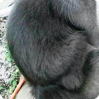 Adopt A Pet :: GRIS - DeLand, FL