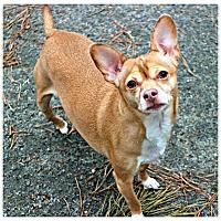 Adopt A Pet :: Carmel - Forked River, NJ