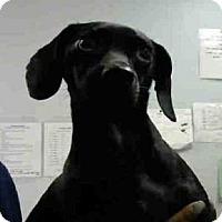 Adopt A Pet :: FLORENCE - Atlanta, GA