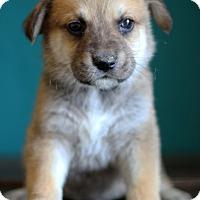 Adopt A Pet :: Raven - Waldorf, MD