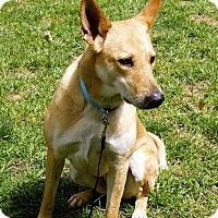 Adopt A Pet :: River (fostered in GA) - Cranston, RI