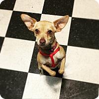 Adopt A Pet :: Sita (LC) - Santa Ana, CA