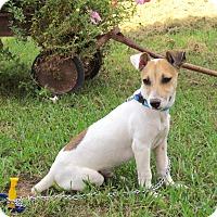 Adopt A Pet :: ORBIT - Bedminster, NJ
