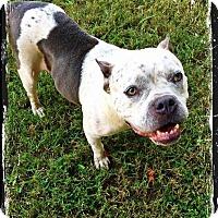 Adopt A Pet :: Bertie - Greensboro, NC