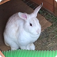 Adopt A Pet :: Wilber - Patterson, NY