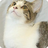 Adopt A Pet :: Prescott - Waynesboro, PA
