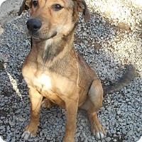 Adopt A Pet :: Leeanna - Yucaipa, CA