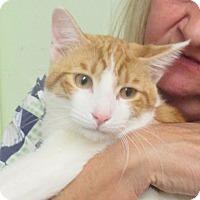 Adopt A Pet :: Curious George - Reeds Spring, MO