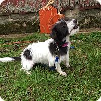 Adopt A Pet :: Spice - Wyanet, IL