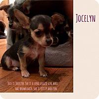 Adopt A Pet :: Jocelyn - Renton, WA