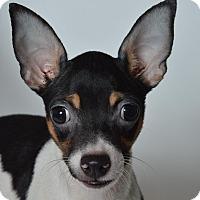 Adopt A Pet :: Jonesy - St. Charles, MO