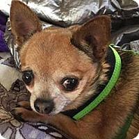 Adopt A Pet :: Toka - San Diego, CA