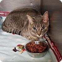 Adopt A Pet :: Nathan - Dickinson, TX