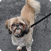 Adopt A Pet :: Bert - Atlanta, GA