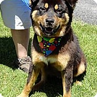 Adopt A Pet :: SEBASTIAN - LOYAL LOVING !! - Bluff city, TN