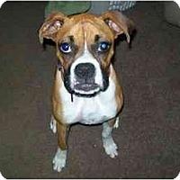 Adopt A Pet :: Ladybug - Savannah, GA