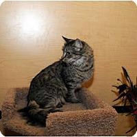 Adopt A Pet :: Rylee - Farmingdale, NY