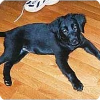 Adopt A Pet :: Cloe - Cumming, GA