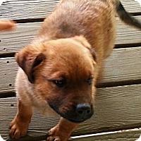 Adopt A Pet :: Eve - Vista, CA