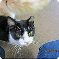 Adopt A Pet :: Boots - Bunnell, FL