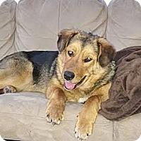Adopt A Pet :: Lexi - Saskatoon, SK