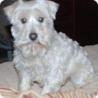 Adopt A Pet :: Ace - Ball Ground, GA