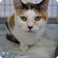 Adopt A Pet :: Colleen - Merrifield, VA