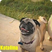 Adopt A Pet :: Katalina - Austin, TX