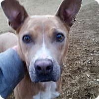 Adopt A Pet :: Vivian - Lebanon, ME