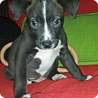 Adopt A Pet :: Ellis - Marlton, NJ
