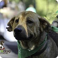Adopt A Pet :: Jillette - Alpharetta, GA