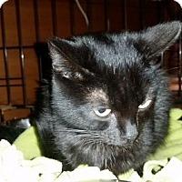 Adopt A Pet :: Lemon Jefferson - Glendale, AZ