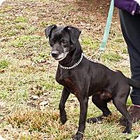 Terrier (Unknown Type, Small)/Border Collie Mix Dog for adoption in Cincinnati, Ohio - Brutus: Fairfax