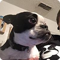 Adopt A Pet :: LuLu - Weatherford, TX