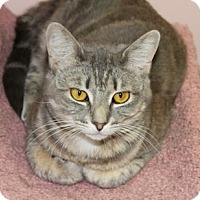 Adopt A Pet :: Trans Am - Lunenburg, MA