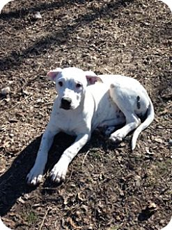 Dalmatian/Terrier (Unknown Type, Medium) Mix Dog for adoption in Burleson, Texas - Poppy