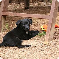 Adopt A Pet :: Penny P - Homewood, AL