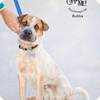 Adopt A Pet :: Bubba (Courtesy Listing) - Scottsdale, AZ