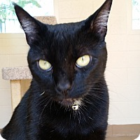 Adopt A Pet :: Binx - Chula Vista, CA