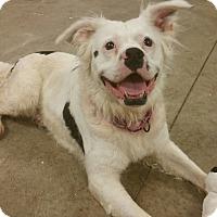 Adopt A Pet :: Patches - Lisbon, OH